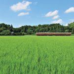 青い空に緑の田んぼ。そこを走るツートンカラーの列車は、古き良きローカル線の風景のものだ(上総川間駅)
