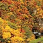 鳴子峡と陸羽東線。高さ約100mのV字型渓谷を囲む紅葉は、息をのむ美しさ (2010.11.1/陸羽東線 鳴子温泉駅~中山平温泉駅)