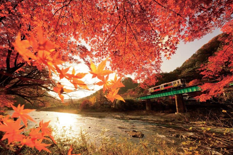 久慈川と鮮やかな紅葉を望みながら走る水郡線(2016.11.16/水郡線 矢祭山駅付近)